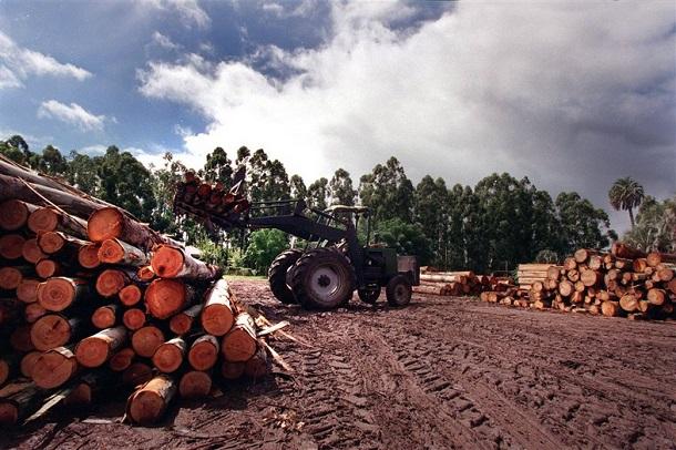 Una industria forestal más sostenible