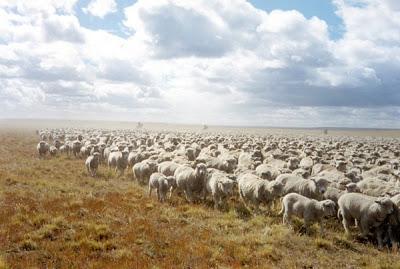 El lobby ganadero resiste la entrada de la carne argentina