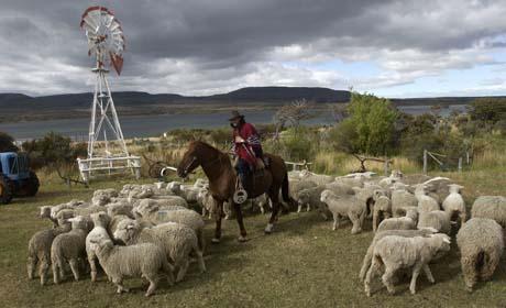 Chile fue habilitada para exportar carnes a China