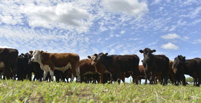 EE.UU. abrió su mercado a la carne argentina y brasileña