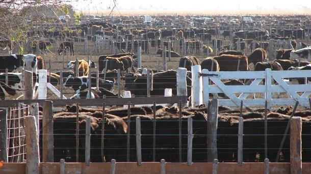 Volver a la ganadería con pasturas y feedlot