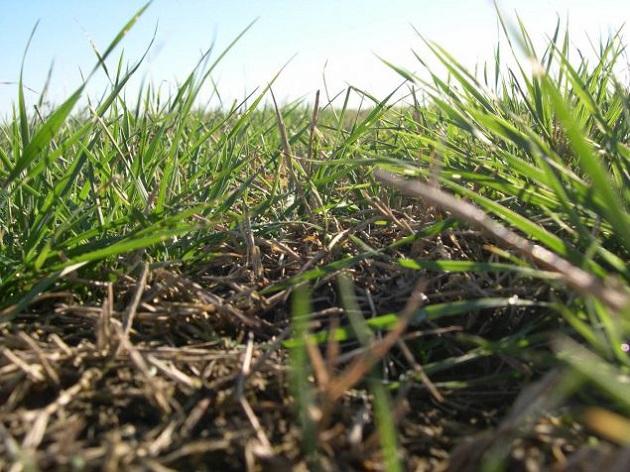 ¿Cuánto forraje produce su campo?