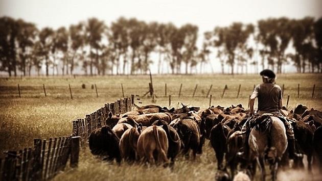Carne bovina, una cadena de valor que pone sus fichas en cada eslabón