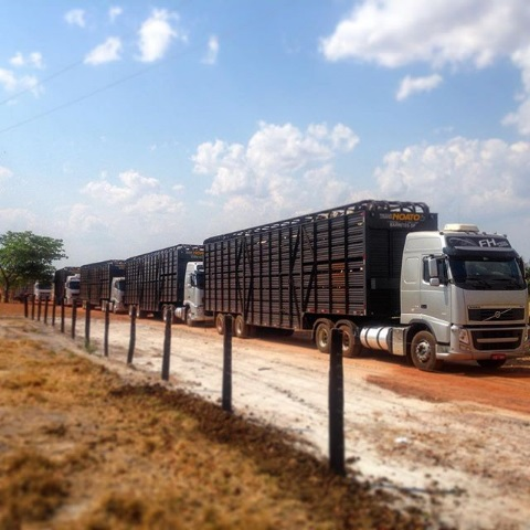 Los efectos de la importación de carne