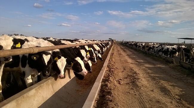 ganaderia a prueba del agua - en los comederos a todo confort